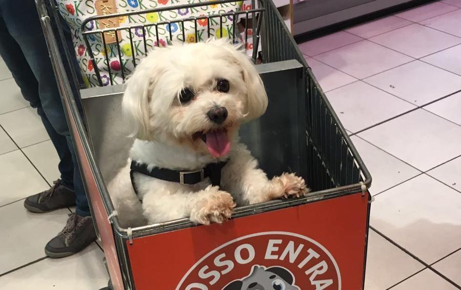 Trasportatore Per Cani Carrefour
