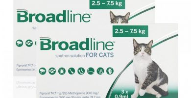 Broadline Gatos Amazon